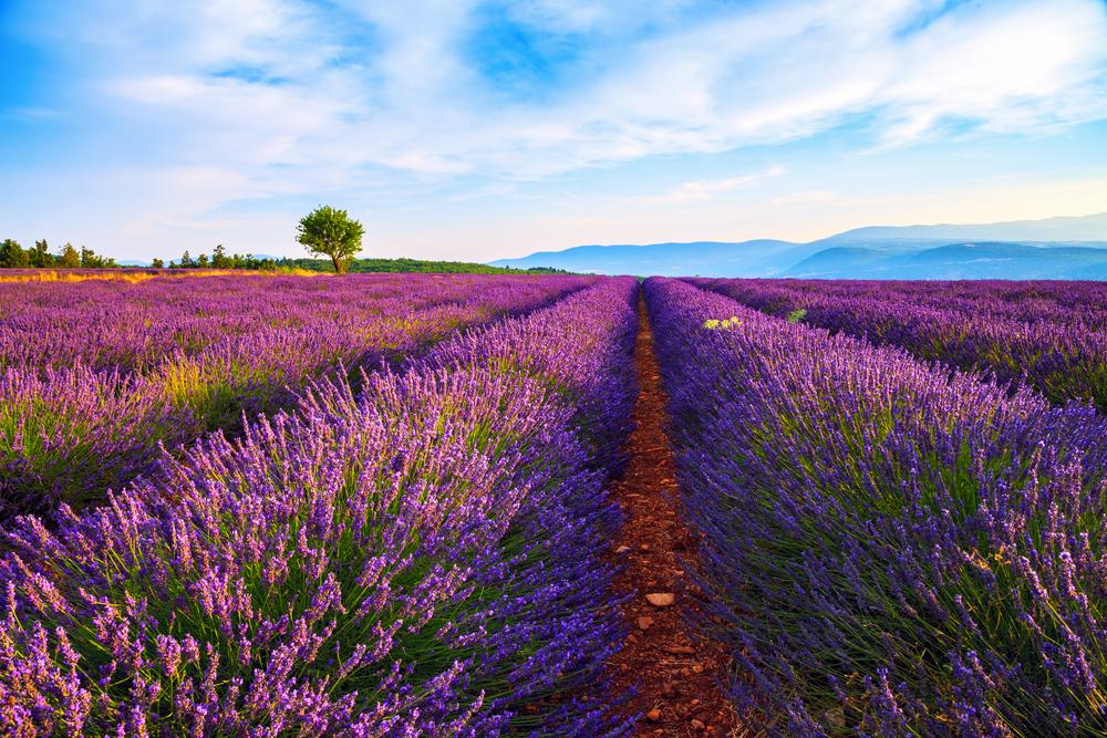Provence - Camping de très belle présentation, dans la catégorie 60/80 emp, avec un CA de 330 k€.